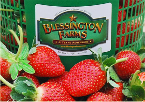 Pick Your Own Berries at Blessington Farms