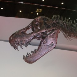 The Houston Museum of Natural Science's Discovery Tour!