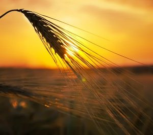 summerheat1