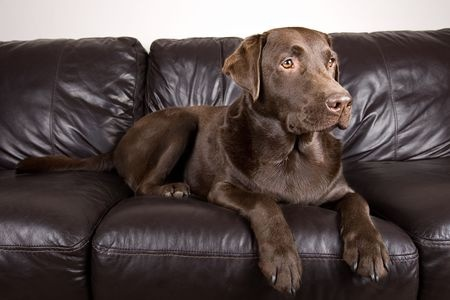 Pets and Your Furniture