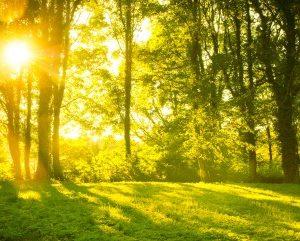 Natural Light Improves Sleep
