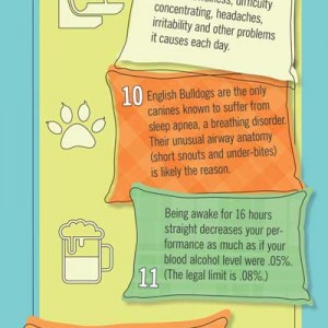 Adult Sleep Infographic