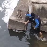Courageous Canine Rescue