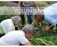 Volunteer at the gardens!