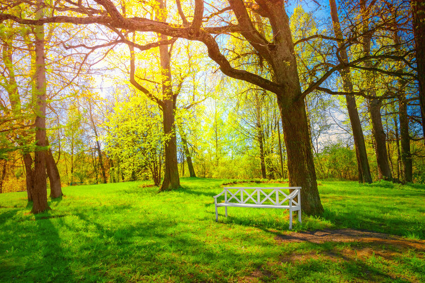 Access to Nature Linked to Better Sleep Quality