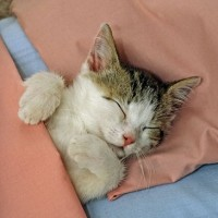 7 Tricks You Must Try to Supercharge Your Sleep