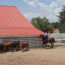 Enjoy Texian Market Day at George Ranch Historical Park