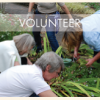 Volunteer at the gardens!